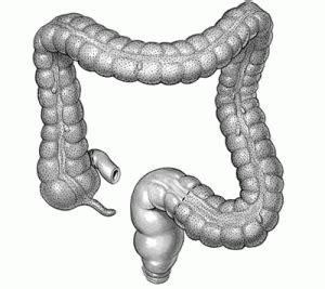 colon treatment richmond va the methuselah center