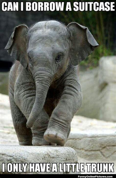 Cute Baby Animal Memes - baby elephant animal memes