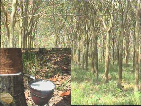 Harga Pupuk Kapur Dolomit dosis pupuk dolomit pada sawit harga pupuk kelapa sawit