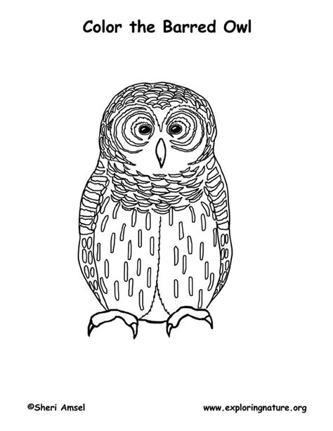 barred owl coloring page owl barred coloring page
