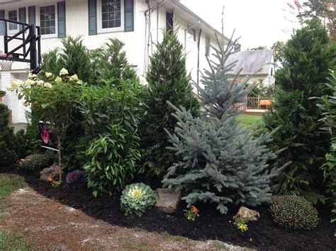 evergreen landscaping create privacy with landscape suz scenery