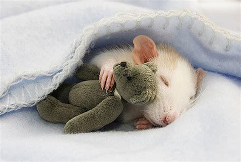 Love youre Life : cute foto`s van dier!!!