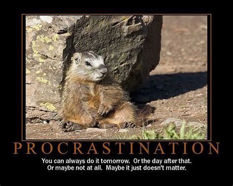 groundhog day saying meaning 9 best procrastination images on