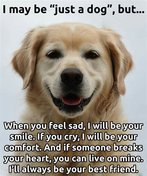 Your Dogs Nationality by Best 25 Best Friend Quotes Ideas On