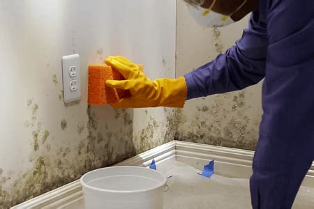 how to kill mold on walls of bathroom how to remove mold from walls in bathroom complete tips