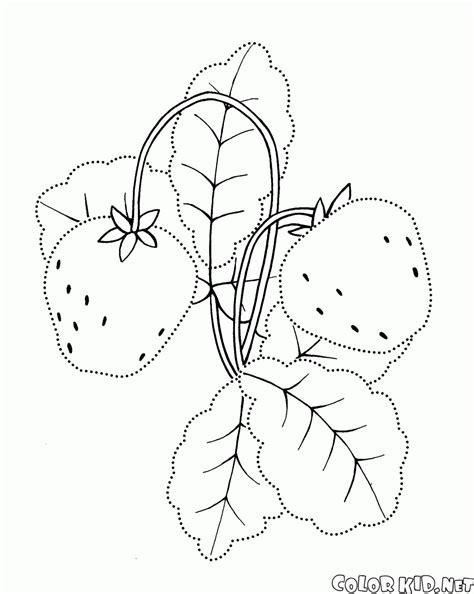 disegni di giardini disegni da colorare fragola di giardino