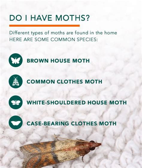 are these moths invading your home learn how to get rid