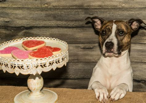 Table Food For Dogs by Condensed Survival Guide Feeding Your From The