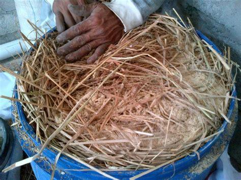 Fermentasi Kulit Kopi Untuk Pakan Ternak pedoman lengkap beternak kambing untuk pebisnis pemula