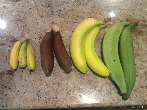 this sh t is bananas principleintopractice