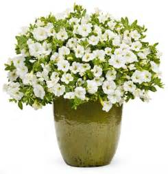 Flower Pot by Flower Pots With Flowers Png Flower Pot Pla I Like This