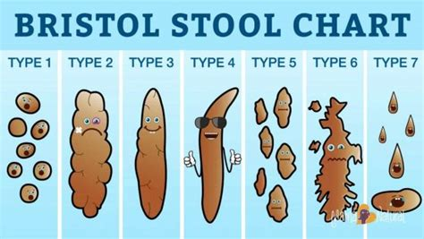 Is It Normal To Get Sick While Detoxing by Bristol Stool Chart What Your Poo Says The Whoot