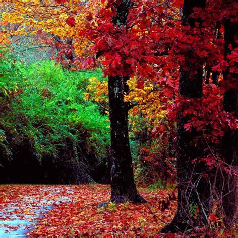 google images fall leaves google images autumn leaves