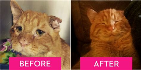 BenBen the Cat   Saddest Cat on the Internet Rescued