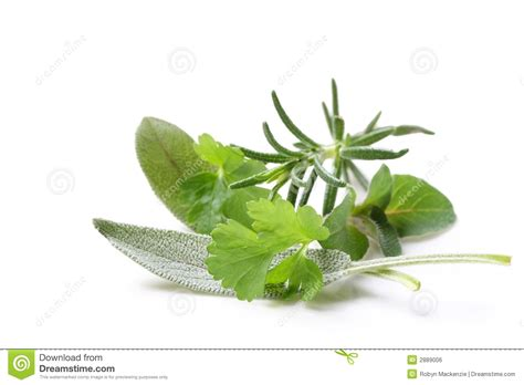 hanging bunches of fresh spicy herbs isolated on white fresh herbs with water drops in a vintage colander on a