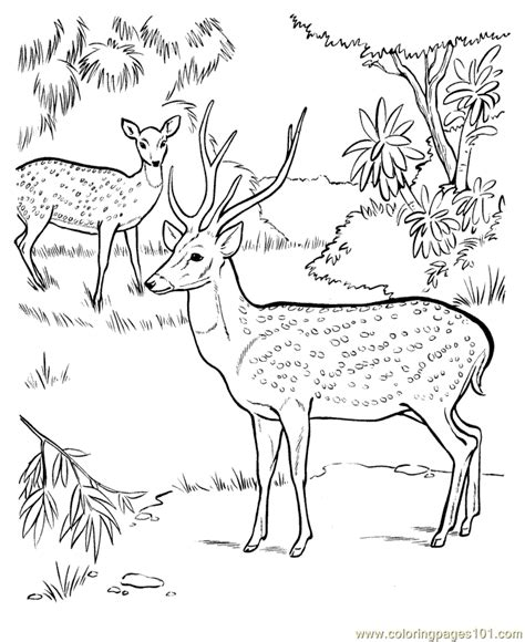 jungle scenery coloring pages jungle scene coloring pages coloring home
