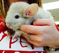 small mammals  sale pet world experience lawrence ks