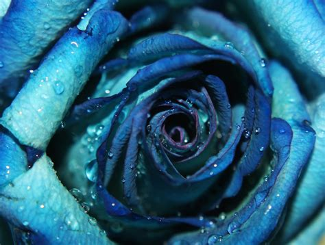 the color blue the of color blue julie ahmed flickr