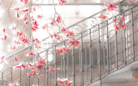 Weiß Blühende Blumen 789 by Die 57 Besten Blumen Hintergrundbilder F 252 R Pc
