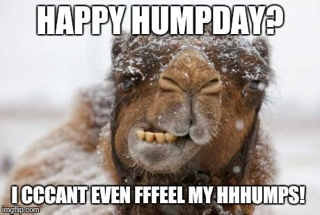 Happy Hump Day Memes - freezing hump day camel imgflip