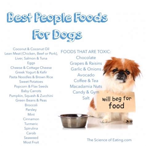 the best food for dogs best foods for dogs