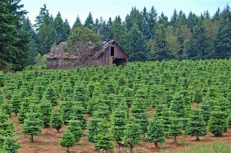 christmas tree farms in coatesville tree farm edmund garman flickr