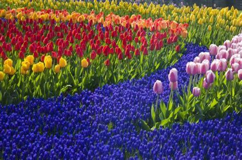 aalsmeer mercato dei fiori l asta dei fiori di aalsmeer ogni giorno 20 milioni di