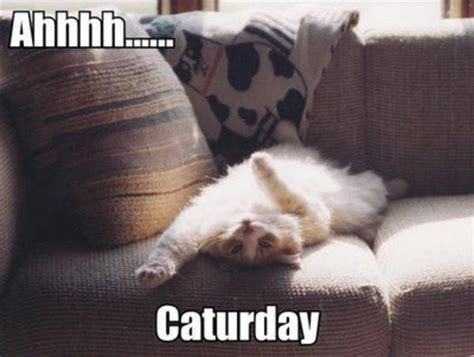 Caturday Meme - image 10012 caturday know your meme