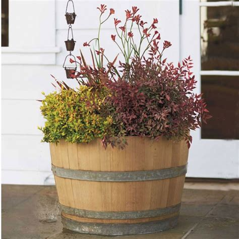 Oak Barrel Planter by Wine Barrel Half Authentic Oak San Diego Drums And Totes