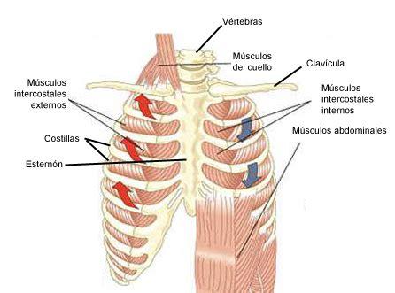 dolore intimo interno el de luc 237 a qu 233 es y como funciona el aparato