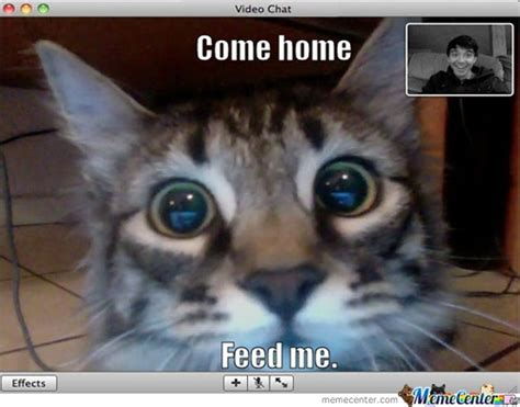 Chat Meme - cute cat memes cute cat is cute memes pinterest