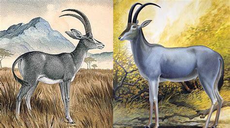 buck blue bluebuck the blue antelope extinct species