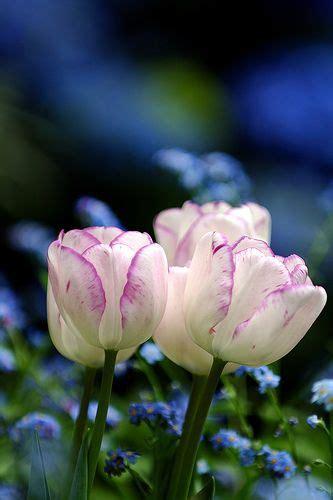 i giardini di marzo si vestono di nuovi colori i giardini di marzo si vestono di nuovi colori e le