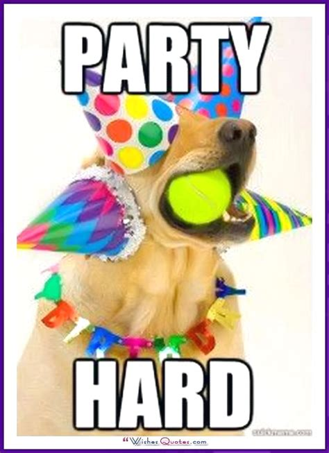 Birthday Party Memes - happy birthday memes with funny cats dogs and cute animals