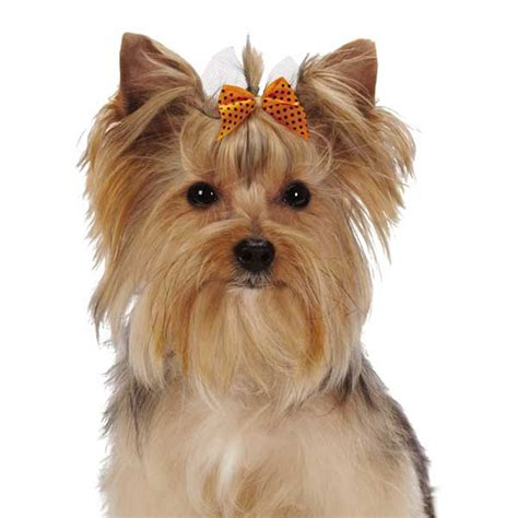 puppy bows polka dot bow baxterboo