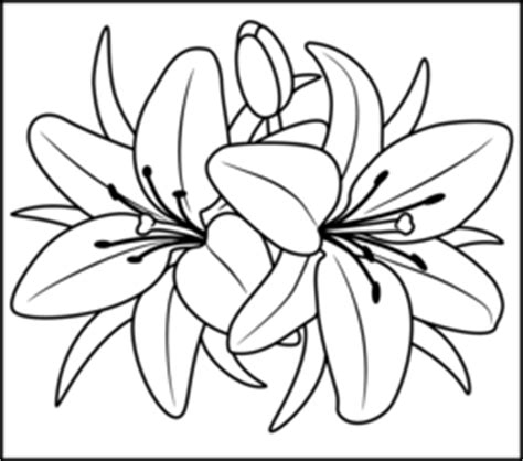 coloring pictures of lily flowers flowers coloring online