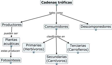 cadenas troficas en ecosistemas cadenas tr 243 ficas cadenas tr 243 ficas en los ecosistemas
