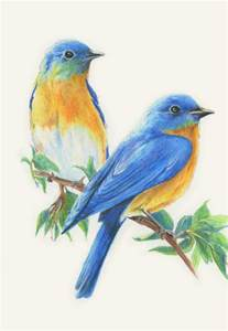 blue colored birds colored pencil birds