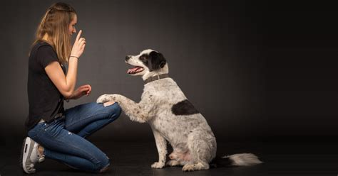 how to house break your dog lovable dogs how to train your dog without cruelty lovable dogs