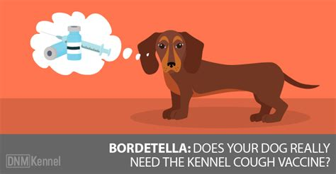 bordetella for dogs bordetella does your really need the kennel cough vaccine dogs naturally magazine