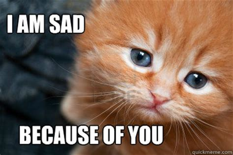 Sad Cat Memes - sad cat memes image memes at relatably com