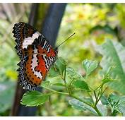 Butterfly  Picture Of Bali Park Tabanan