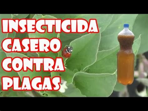 imagenes de insecticidas naturales insecticida casero para combatir plagas pulg 243 n cochinilla