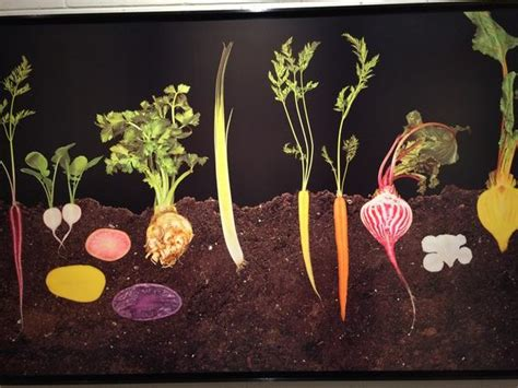 vegetables underground selena maranjian on quot cool rt mdichristina