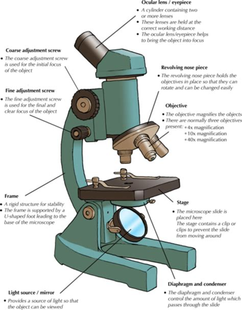 Light Microscope Definition by Parts Of Microscope And Functions Khafre
