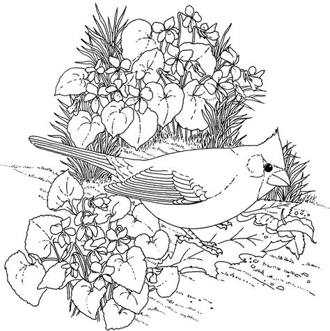 coloring pages of state birds and flowers his heart of compassion little winter birds
