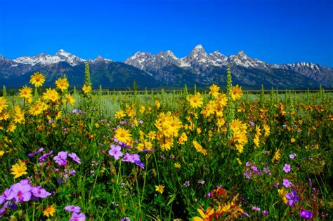 Most Beautiful Parks In The Us by National Parks