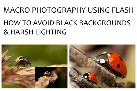 harsh lighting macro photography using flash how to avoid black