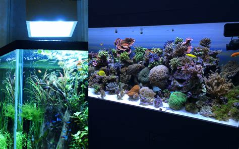 led lighting for planted aquarium roselawnlutheran