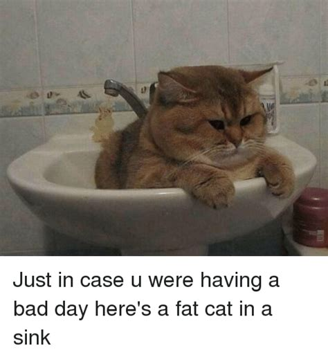 Fat Cat Meme - 25 best memes about fat cats fat cats memes
